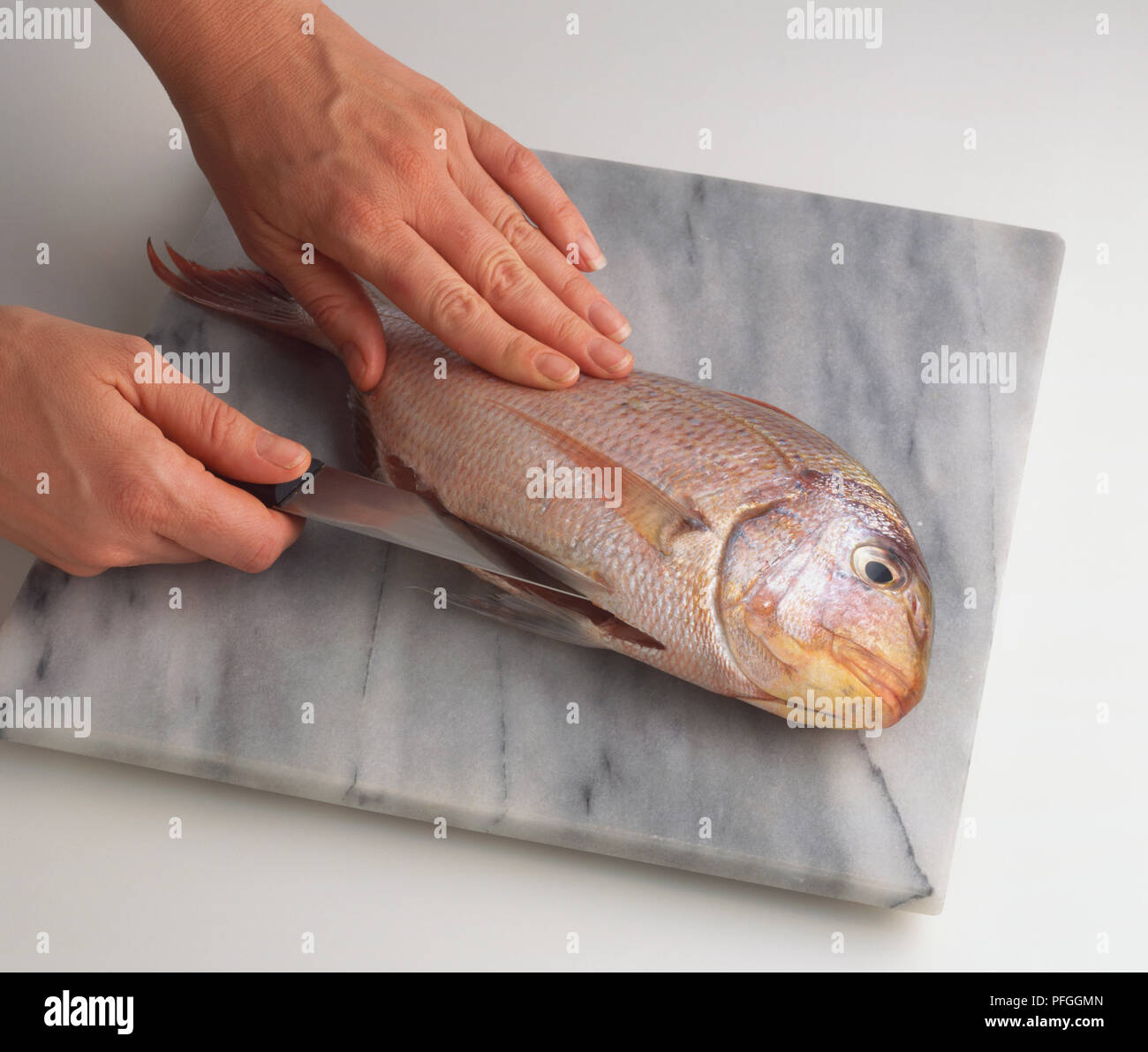 Using knife to slit belly of uncooked Sea Bass (Serranidae), high angle view. - Stock Image