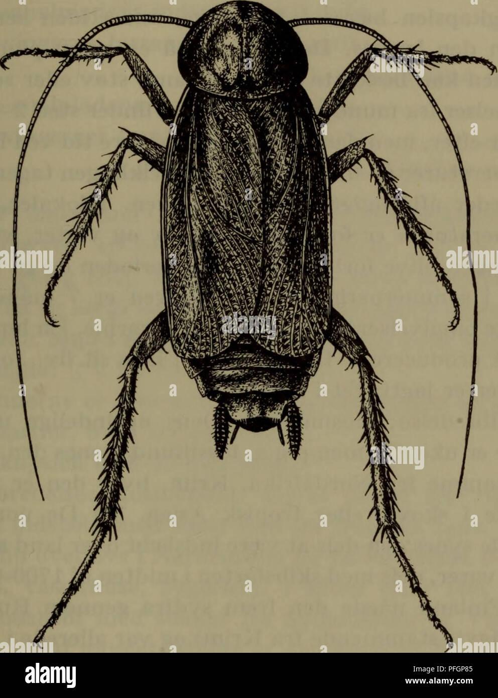 9d9ca329 Danmarks fauna; illustrerede haandbøger over den danske dyreverden... 29 B,  .