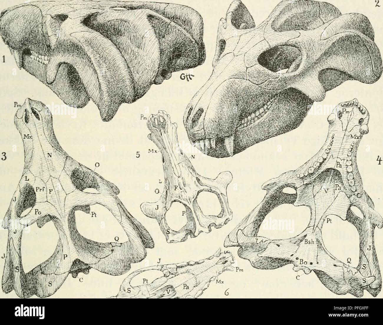 Forklare absolut dating af fossiler