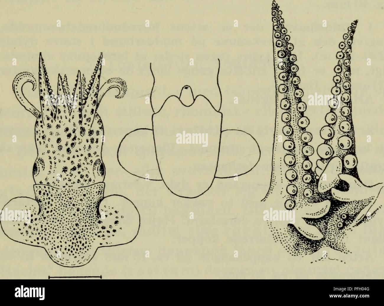 5218cd1eb743 Danmarks fauna  illustrerede haandbøger over den danske dyreverden... 135  nok den .