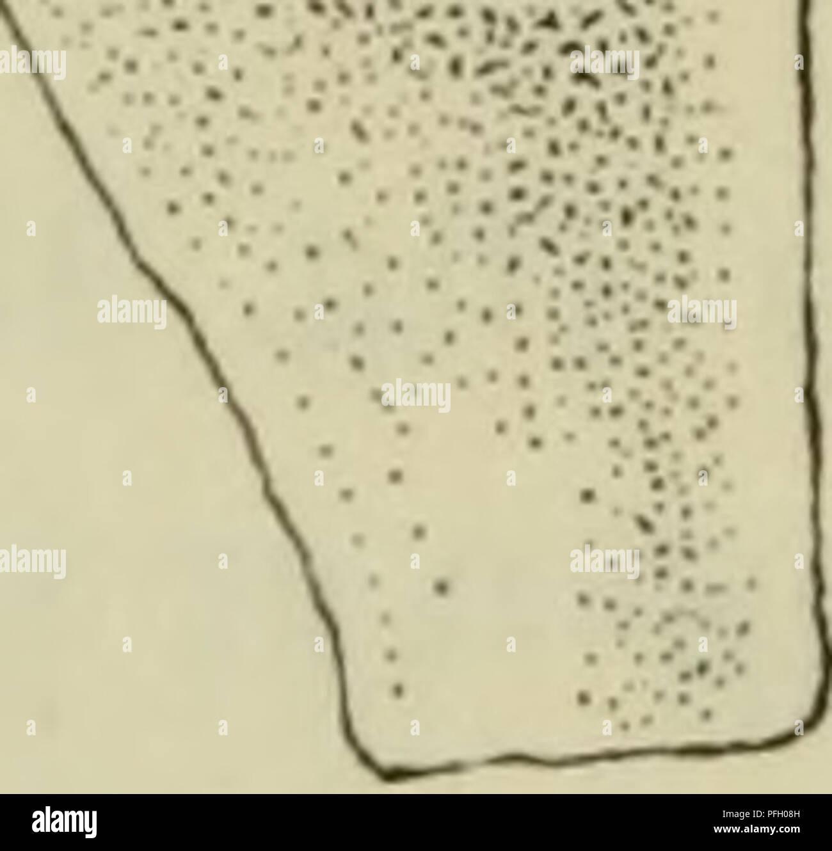 Kort Middelhavslandene 77 X 66cm Kontinent Europa Europa Vaegkort