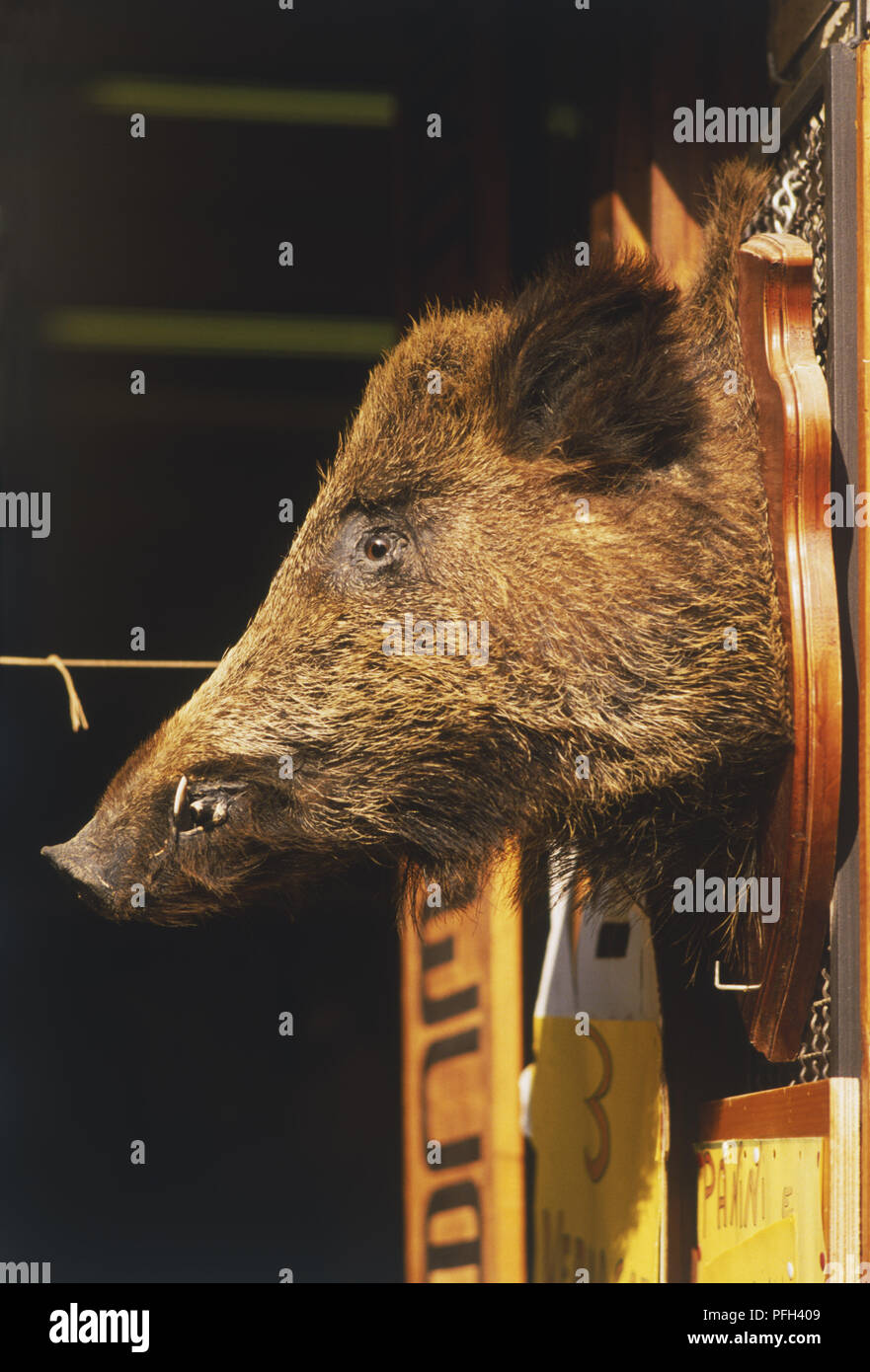 Italy, Central Tuscany, Chianti, boar's head on polished wood plaque at entrance to store, profile view - Stock Image