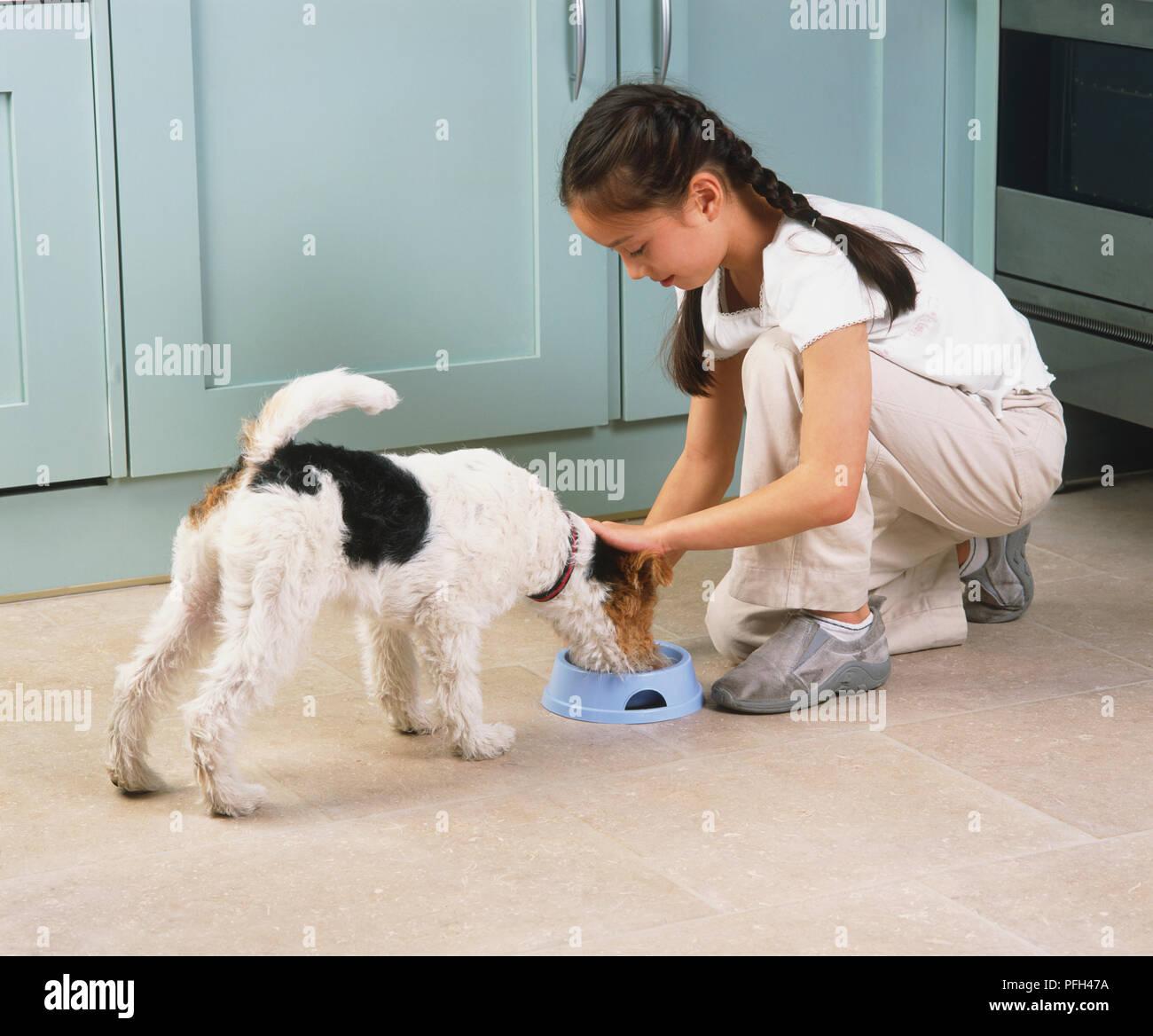 A Fox Terrier Stock Photos & A Fox Terrier Stock Images - Alamy