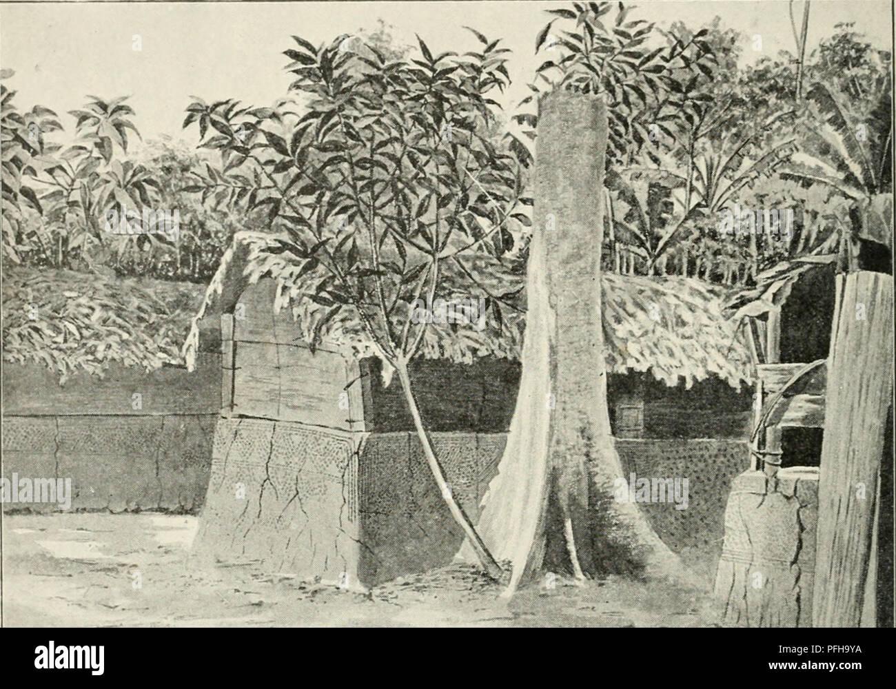 . Dans la grande forêt de l'Afrique centrale. Mon voyage au Congo et à la Mongala en 1896. Botany. 38 Chapitre IF En continuant notre route vers le nord, nous traversâmes la croupe large d'une colline basse et assez sèche, couverte de hautes futaies, et, après une marche de sept heures, nous atteignîmes le village de ftfukamba. Peu après, nous rencon- trâmes un groupe de trois villages qui portent le nom de Mond j erengi (ou Monkerenke). Au delà de cette localité se suivent à peu de distance les villages de M (il n 1 u, O polo, Congo fou Gundji)et Masanga, qui comptent à peu près une  - Stock Image