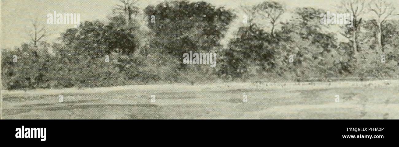 . Dans la grande forêt de l'Afrique centrale. Mon voyage au Congo et à la Mongala en 1896. Botany. Sur le Congo 13 cases du village ressemblent à celles de Bolobo, mais sont de plus petites dimen- sions. (V. pi. 19 et 21.) Cette contrée abonde en moustiques; on dit même que les blancs sont quelquefois obligés de prendre leurs repas sous un moustiquaire. Un peu plus loin, en face de l'embouchure parsemée d'îles de l'Ubangi, à l'en- droit où le lac de Tumba verse le trop-plein de ses eaux dans le fleuve principal, se trouve, sur la rive gauche du Congo, le camp militaire (camp d'instructi - Stock Image