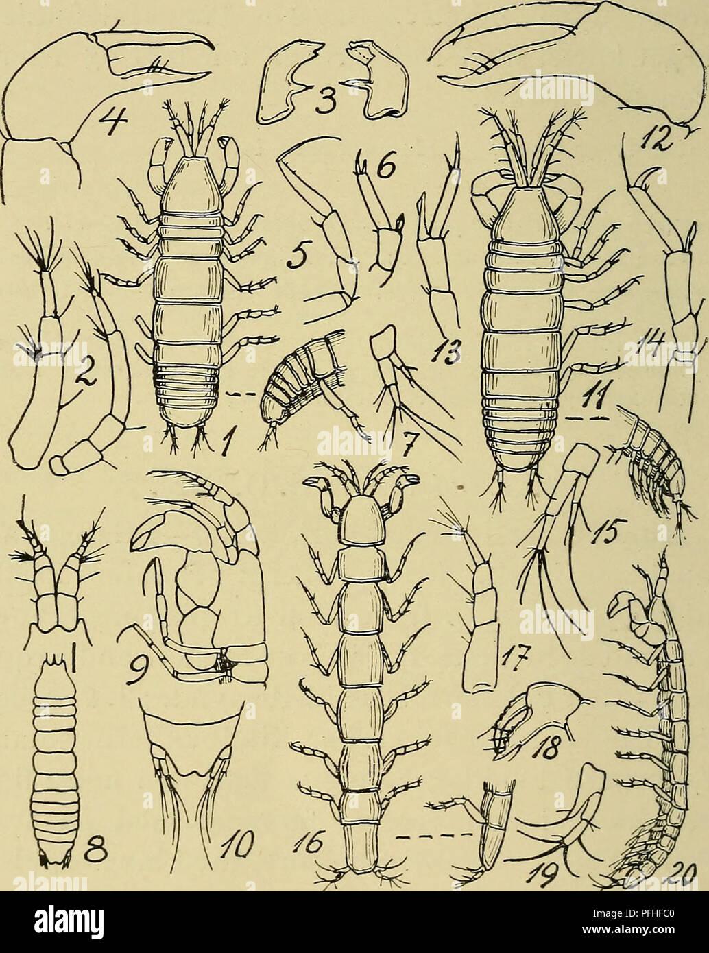 47c9a618e7d Danmarks fauna; illustrerede haandbøger over den danske dyreverden... 178  fødder mangler .
