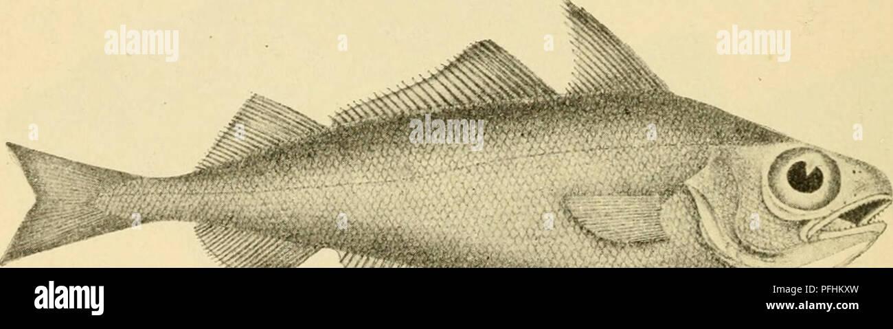 Fisk noget dating site