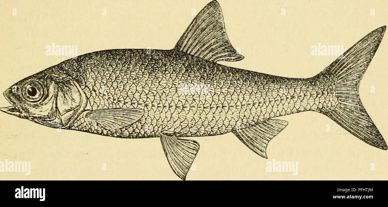 fisk ud vand dating site