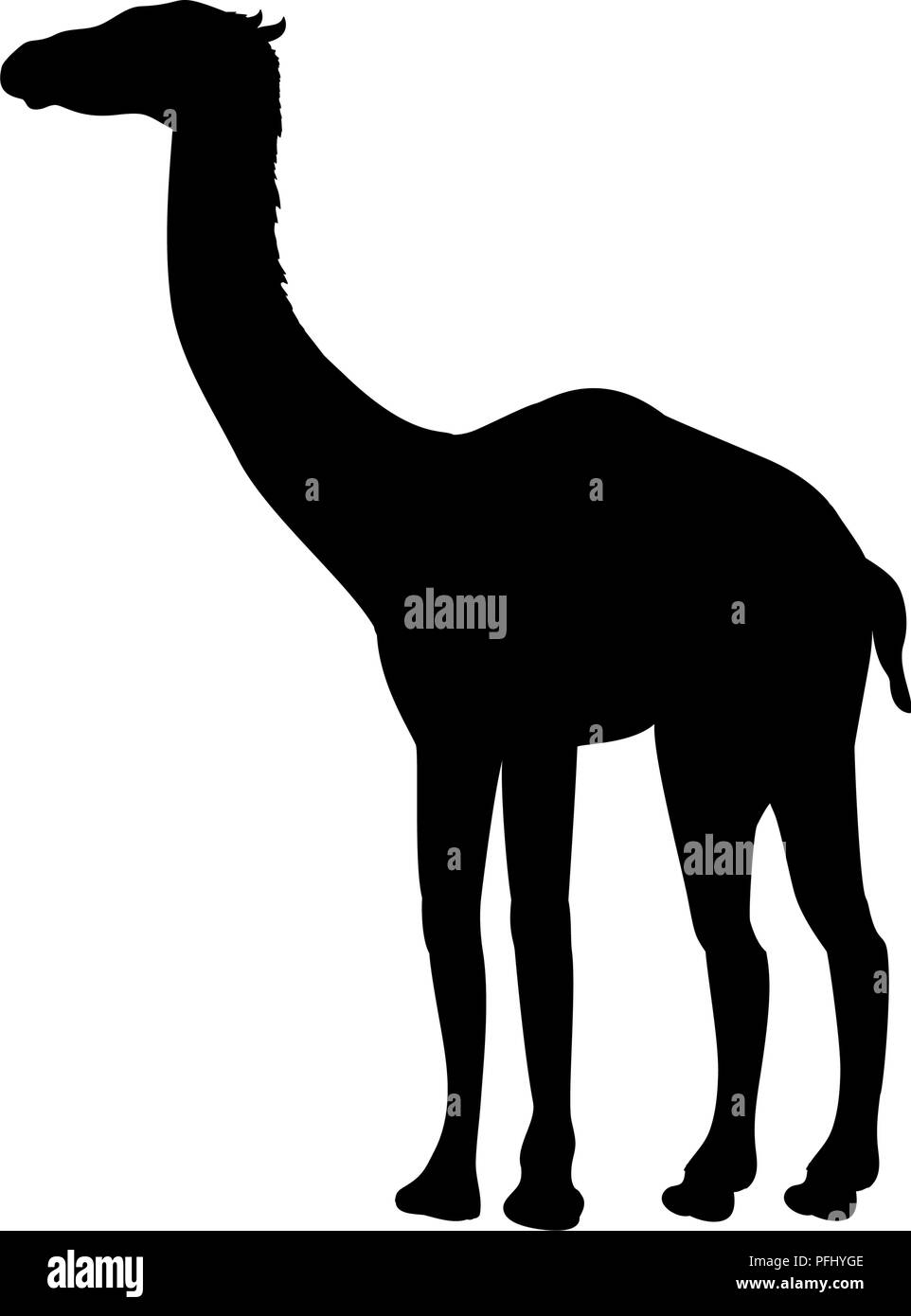 Aepycamelus prehistoric camel silhouette extinct mammal animal - Stock Image