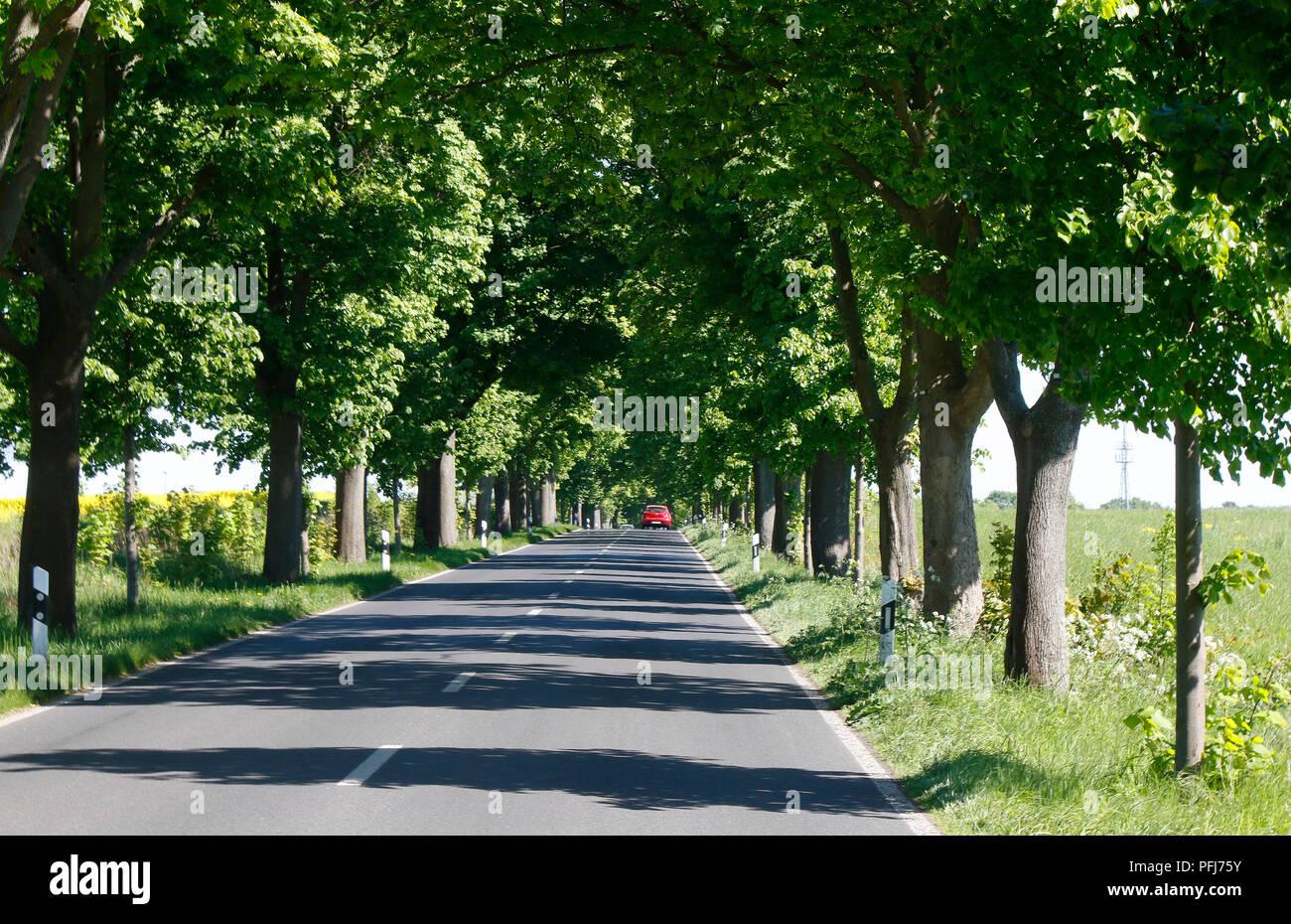 Landstrasse bei Schoenfliess, Muehlenbecker Land, Brandenburg. Stock Photo
