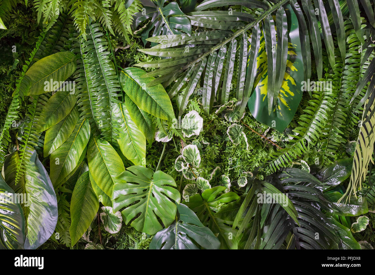 jungle leaves dark stock photos jungle leaves dark stock images
