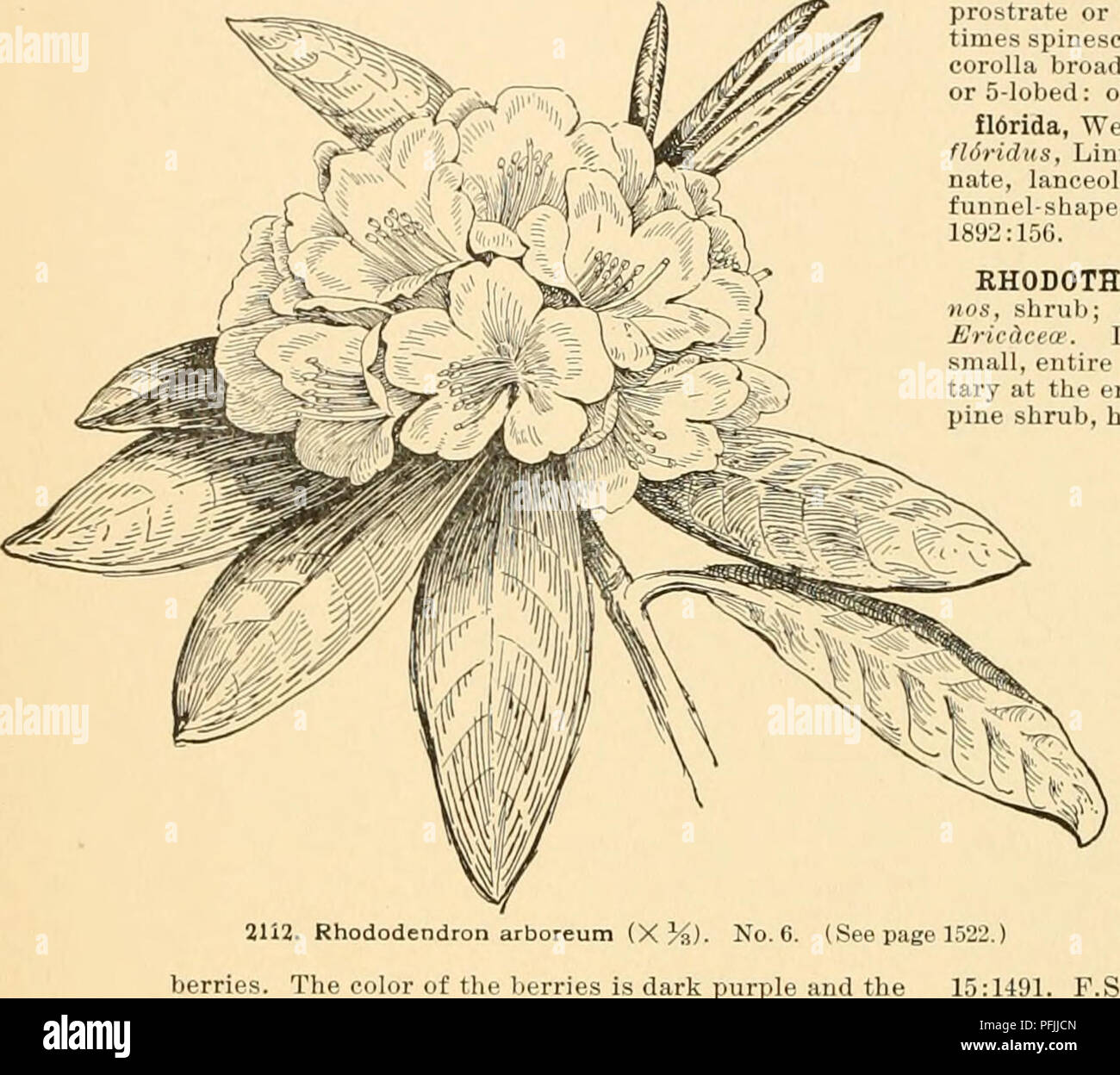 Cyclopedia of American horticulture : comprising suggestions