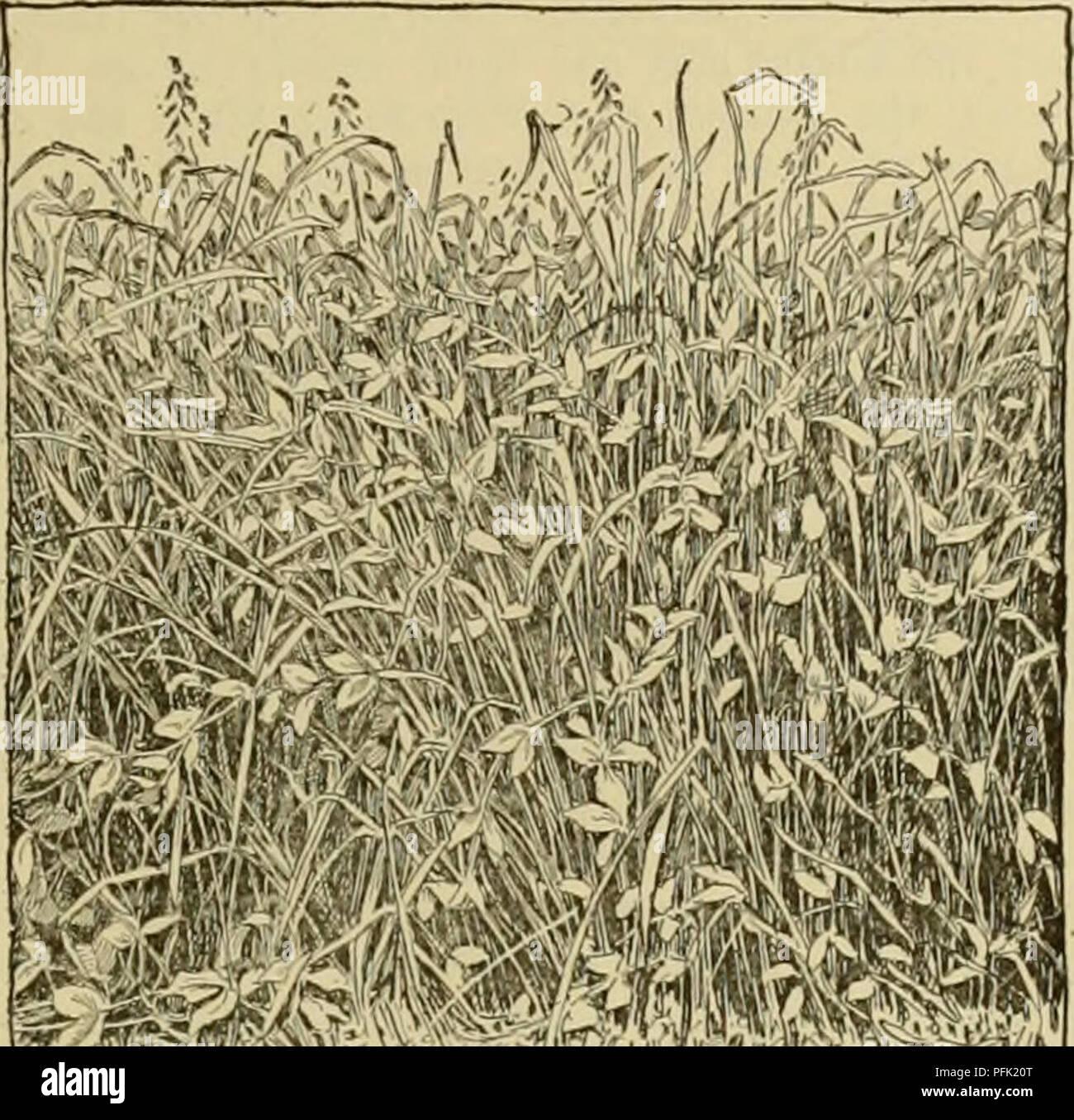 Cyclopedia Of Farm Crops Farm Produce Agriculture Pea Pea 511