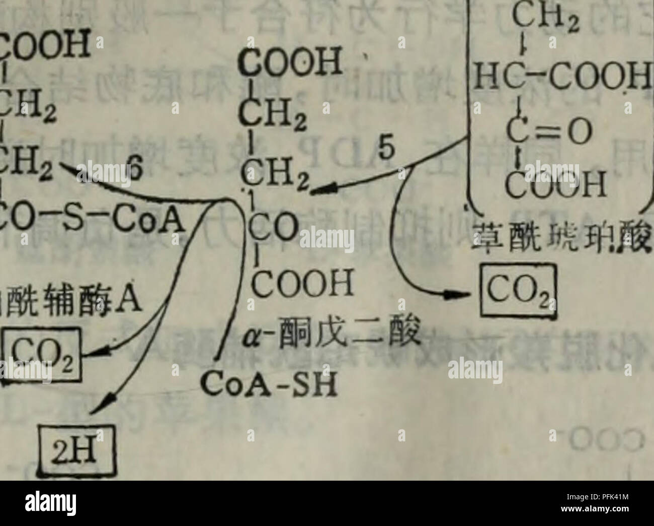 Dai Xie Tang Ji Qi Tiao Kong Yu He Suan Botany COOH CH2 CH2gt C0A SH 7 4o S CoA GDP Pi Ae 3 4 A Ca 1ae