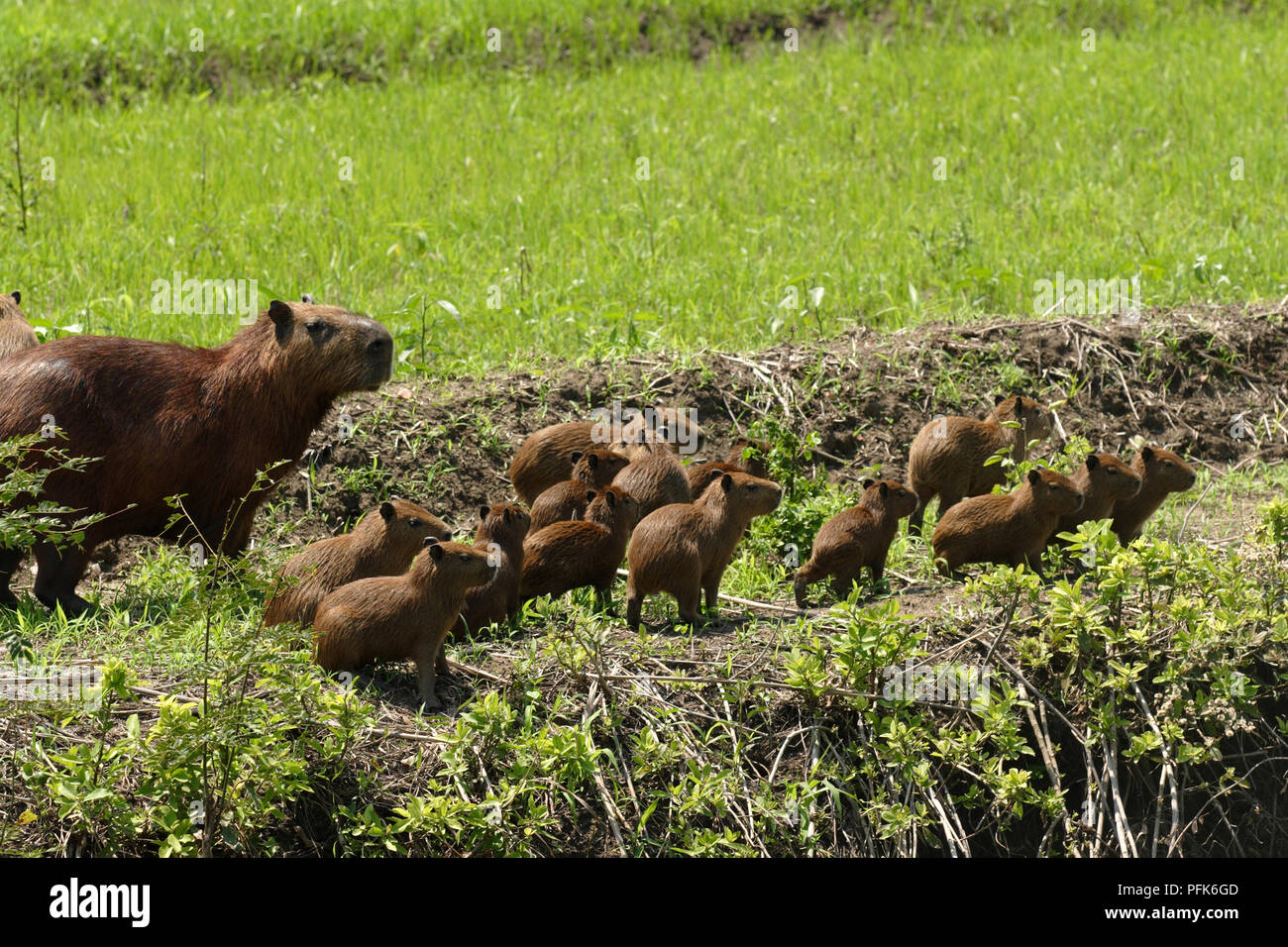 Brazil Baby Animals