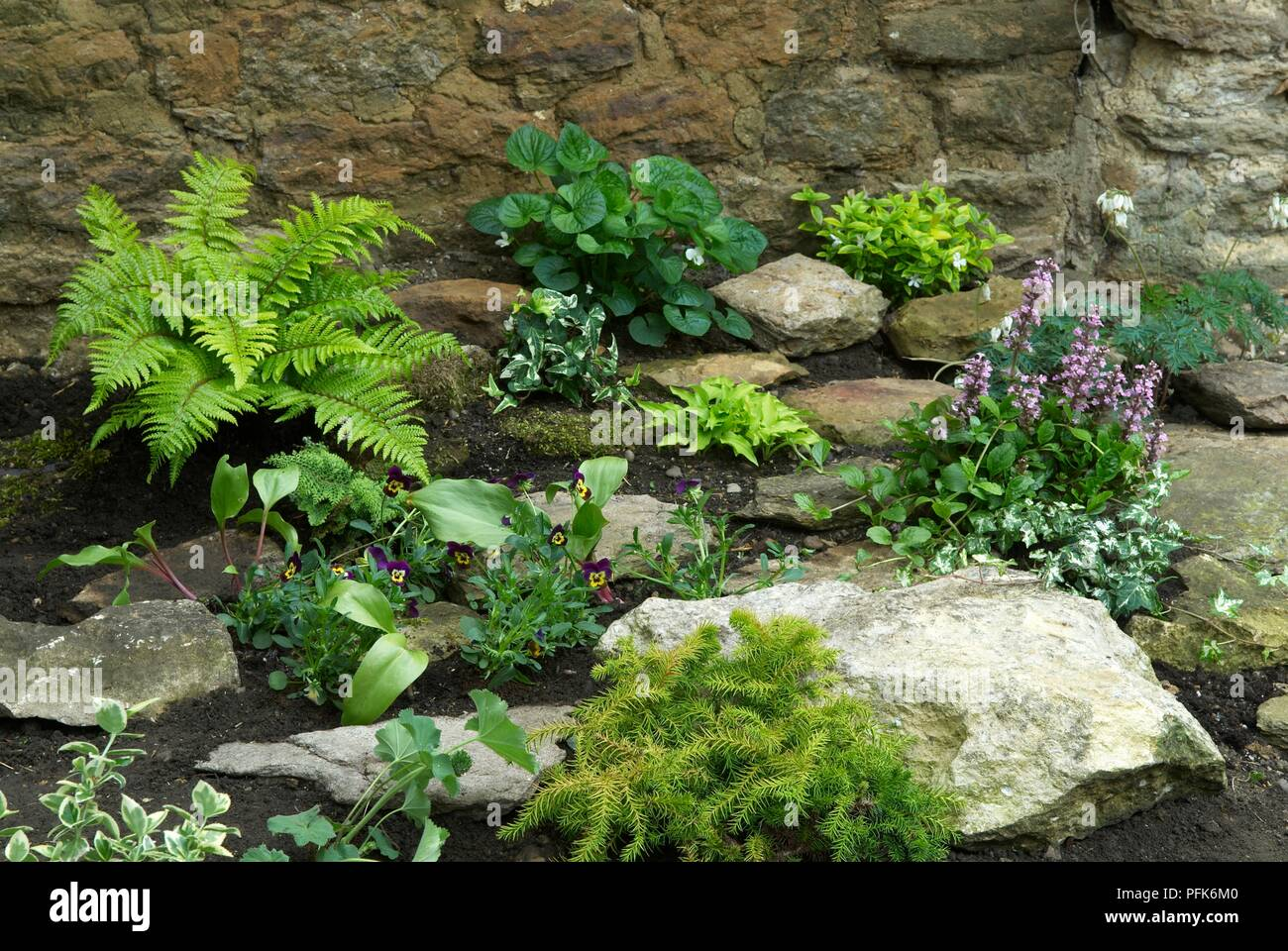 Rockery With Various Plants Including Fern Hosta Ivy Pansy