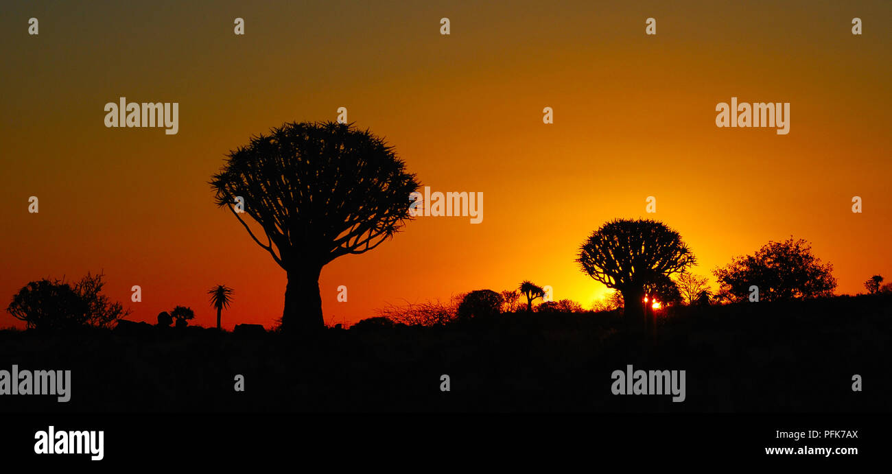 Romantic sunset over the Quivertree Forest  near Köcherbaumwald Namibia - Stock Image