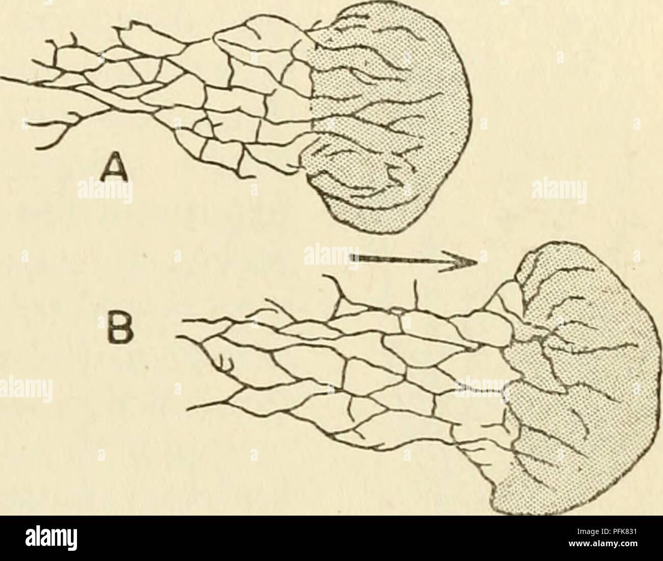 Cytoplasm Plant Cell