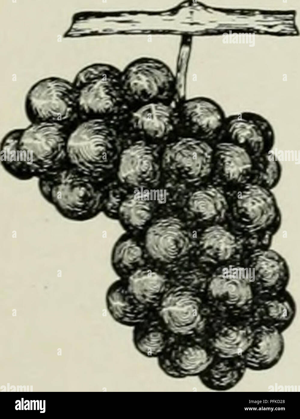 Cyclopedia Of Hardy Fruits Fruit Fruit Culture James Jessica 249