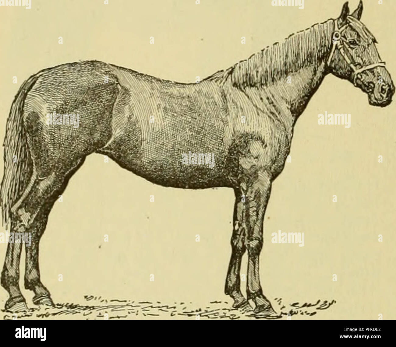 Cyclopedia Of Farm Animals Domestic Animals Animal Products 454 Horse Horse As He Can Obtain From Job Masters A Large Sum For A Pair Of These Overgrown Animals He Will Do