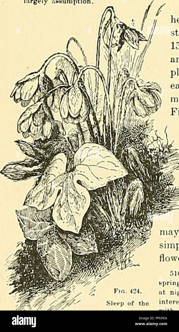 Cyclopedia of American horticulture, comprising suggestions for