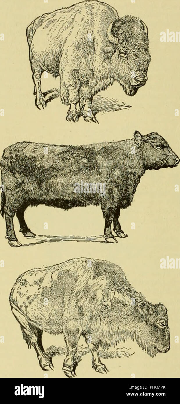 Cyclopedia Of Farm Animals Domestic Animal Products 290 First Words Bison To The Lexicons And Encyclopedias It Is Now Pro Posed Adopt