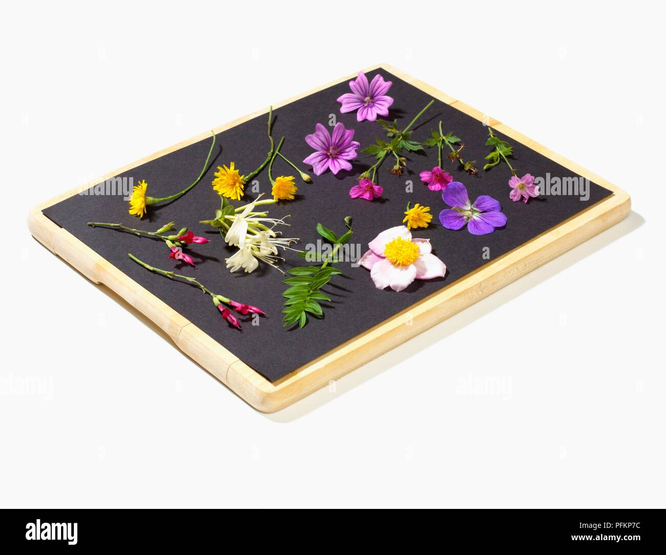 Fresh Flowers Laid Out On Blotting Paper Pressing Flowers Stock