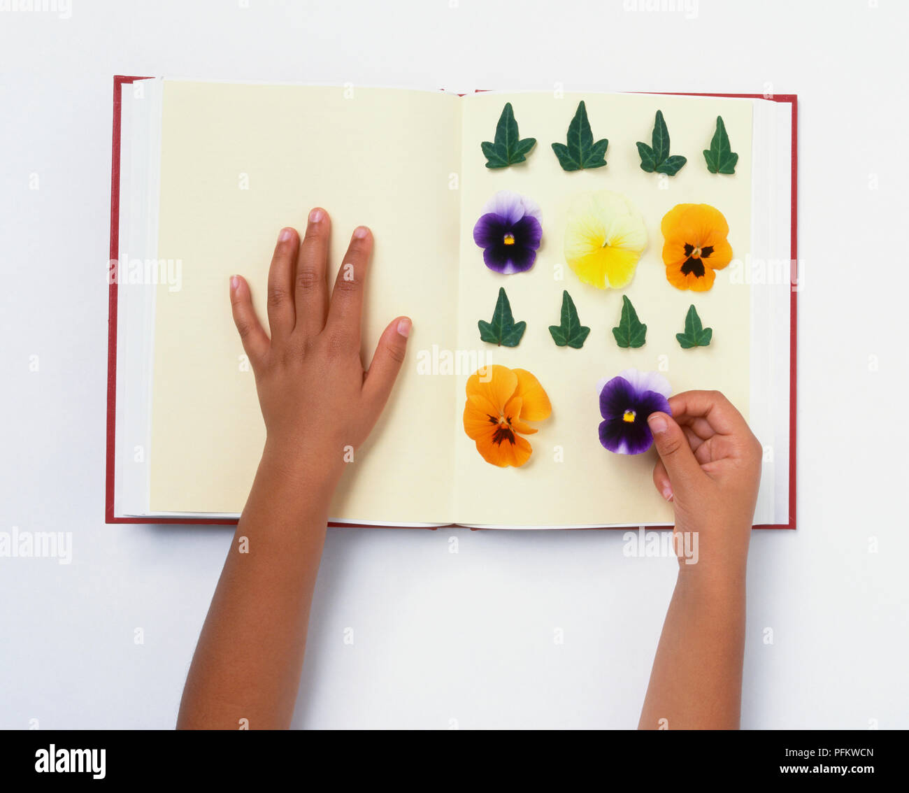 Pressing flowers girl laying flowers and leaves on top of blotting pressing flowers girl laying flowers and leaves on top of blotting paper in a book mightylinksfo