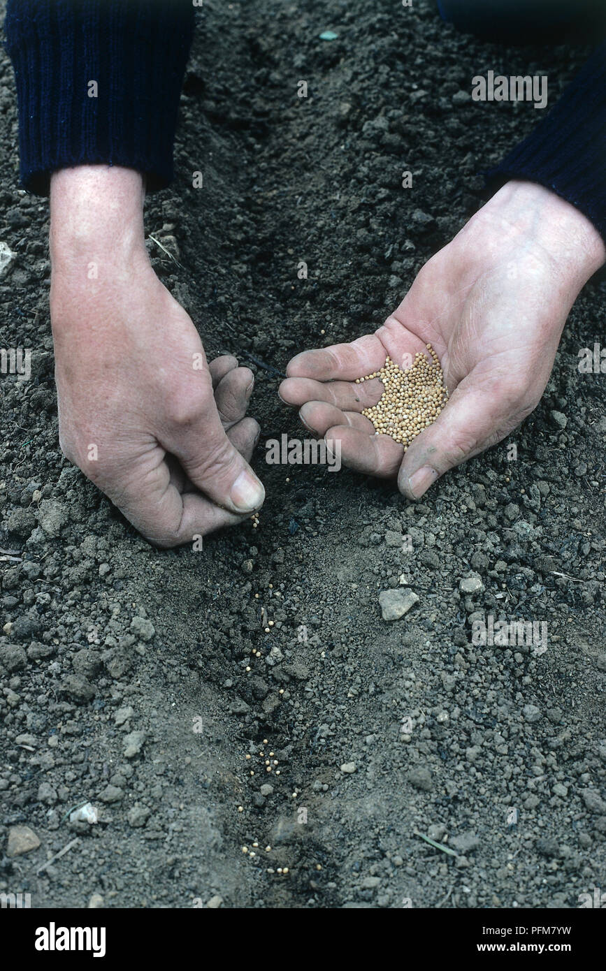 Man's hands scattering seeds in soil. - Stock Image