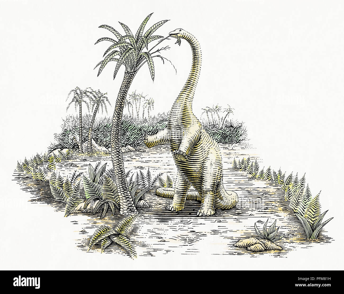 Diplodocus And Kentrosaurus Models: Dinosaurs Cut Out Stock Images & Pictures