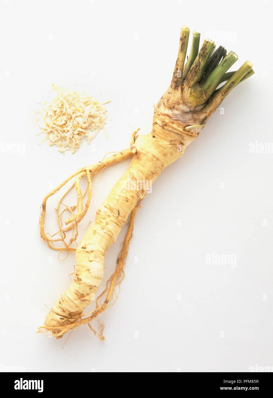 Amoracia rusticana, Horseradish, whole and grated - Stock Image
