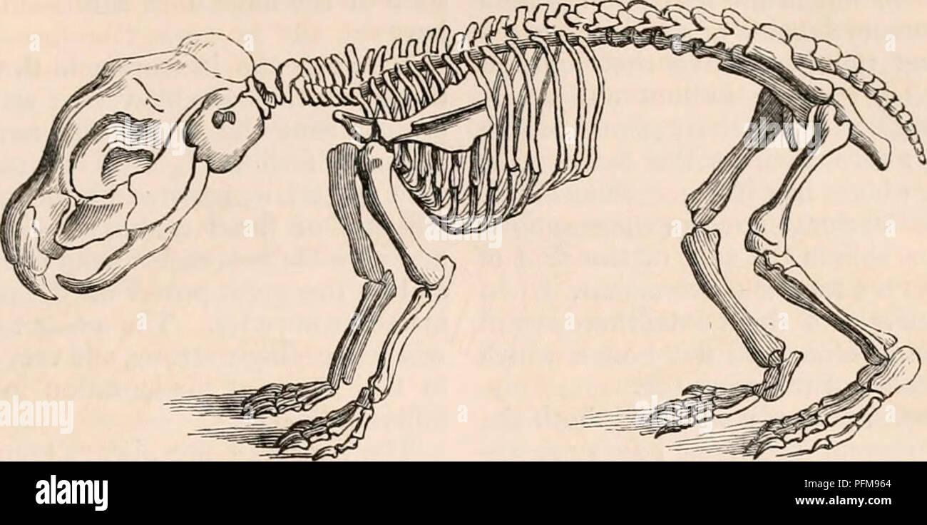 The cyclopædia of anatomy and physiology. Anatomy ... on