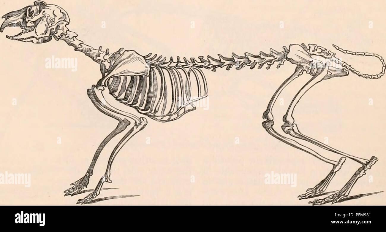 Skeleton Diagram Of A Chinchilla - Wiring Diagram Database •