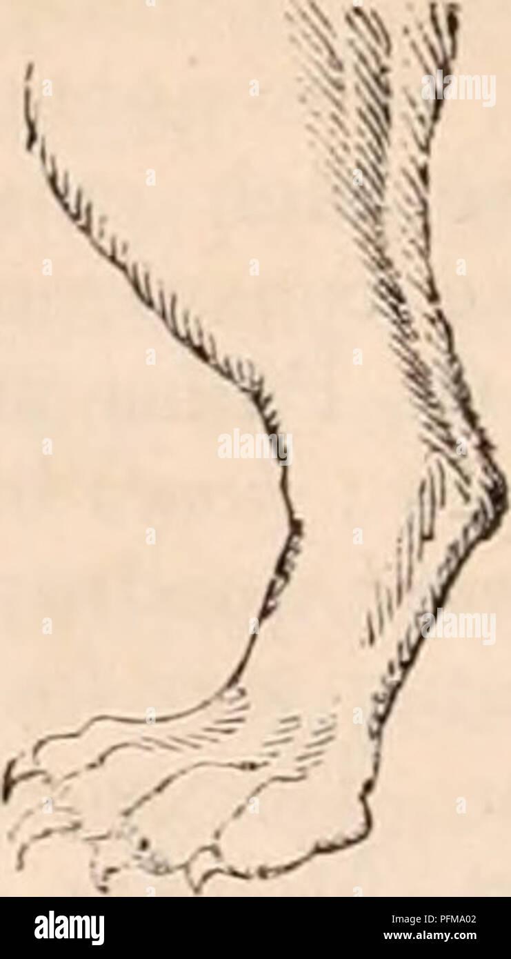 The cyclopædia of anatomy and physiology  Anatomy