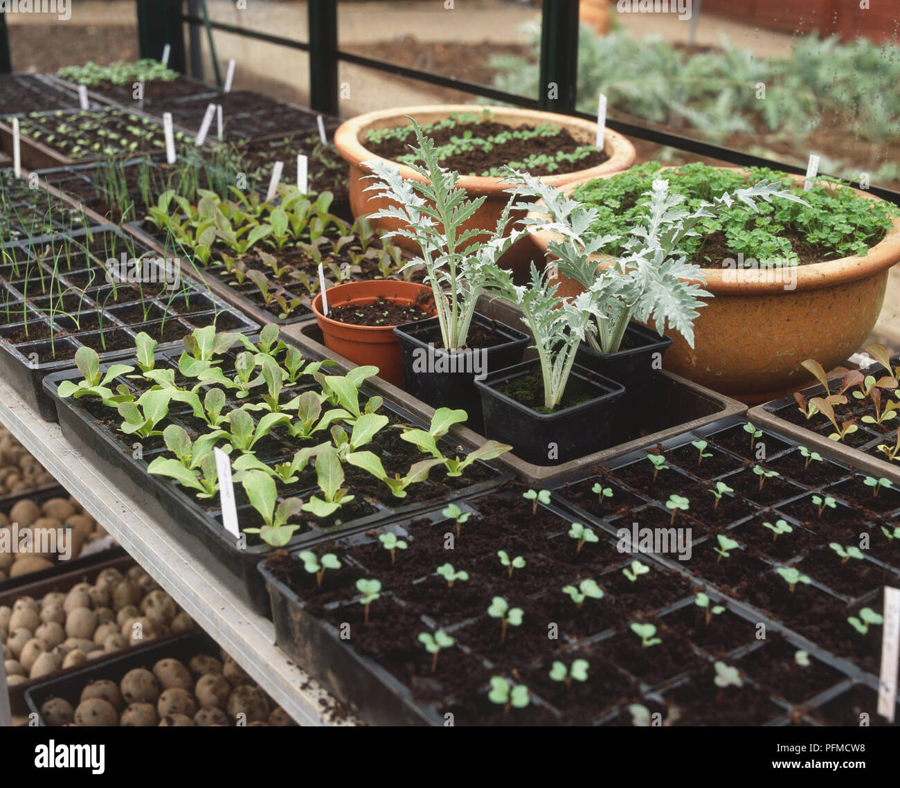 Various Seedlings Growing In Plastic Trays Pots And Modules Inside Greenhouse Elevated View Stock Photo Alamy
