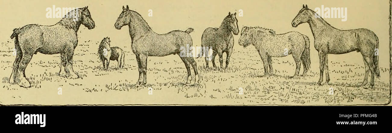 Cyclopedia of farm animals  Domestic animals
