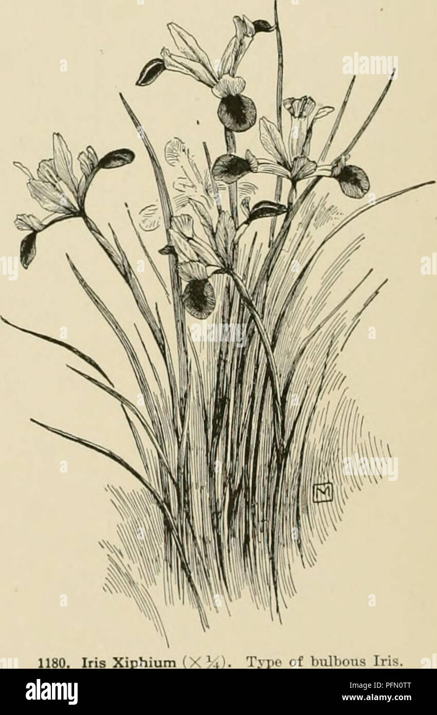 Cyclopedia Of American Horticulture Comprising Suggestions For