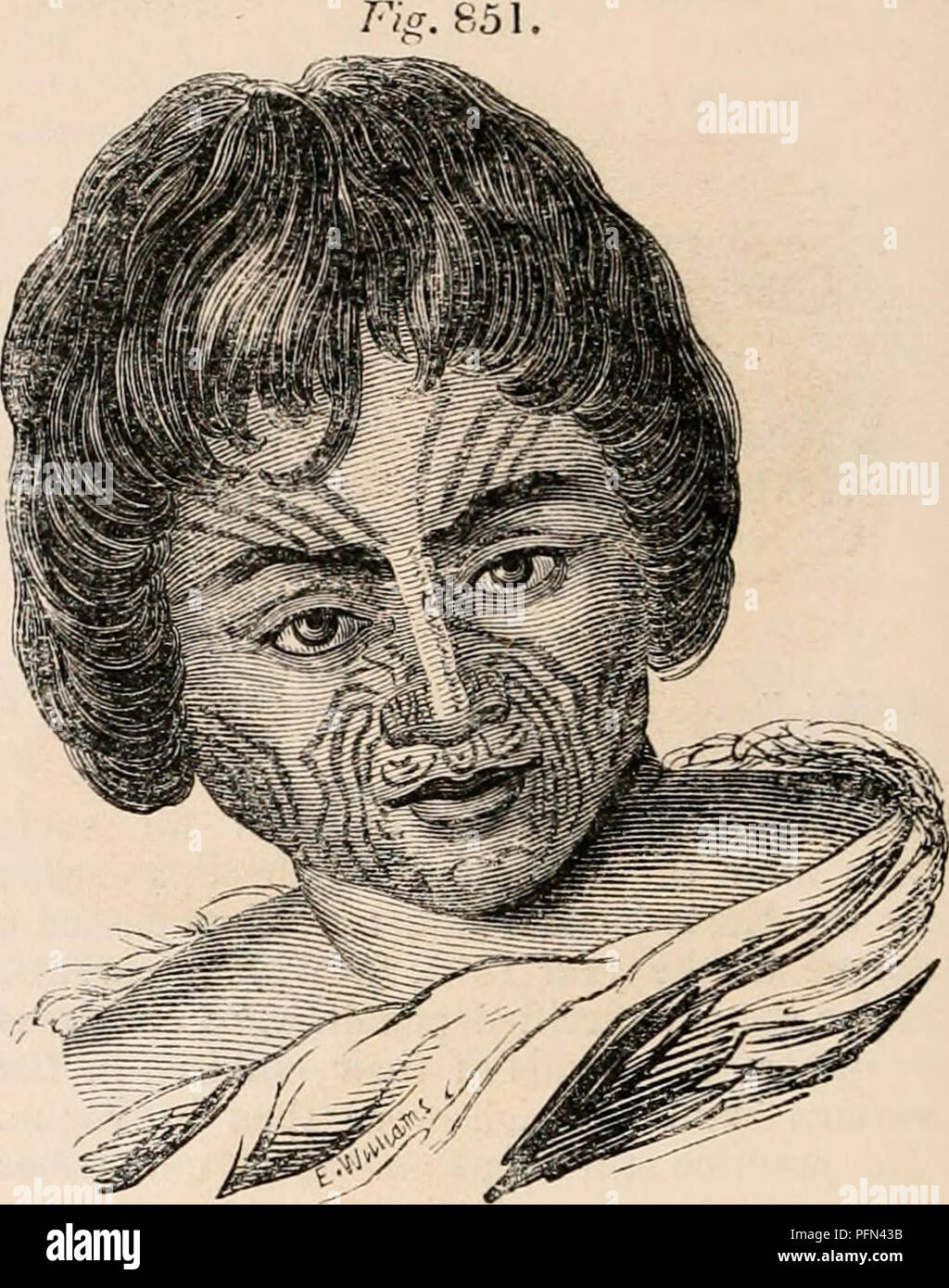 """. The cyclopædia of anatomy and physiology. Anatomy; Physiology; Zoology. Tahltian Female. (From a portrait by an officer of """" L'Artemise."""") plexion, especially in the females of the higher classes, who are sheltered from the wind """"and sun, is of a clear olive, or brunette, such as is common among the natives of Southern Eu- rope; and the hair, though generally black, is sometimes brown or auburn, or even red or flaxen. Among other tribes, as the Sandwich Islanders, the New Zealanders, and the Ton^a and _ Friendly islanders, there are greater cTi- versities of hue and conformati - Stock Image"""
