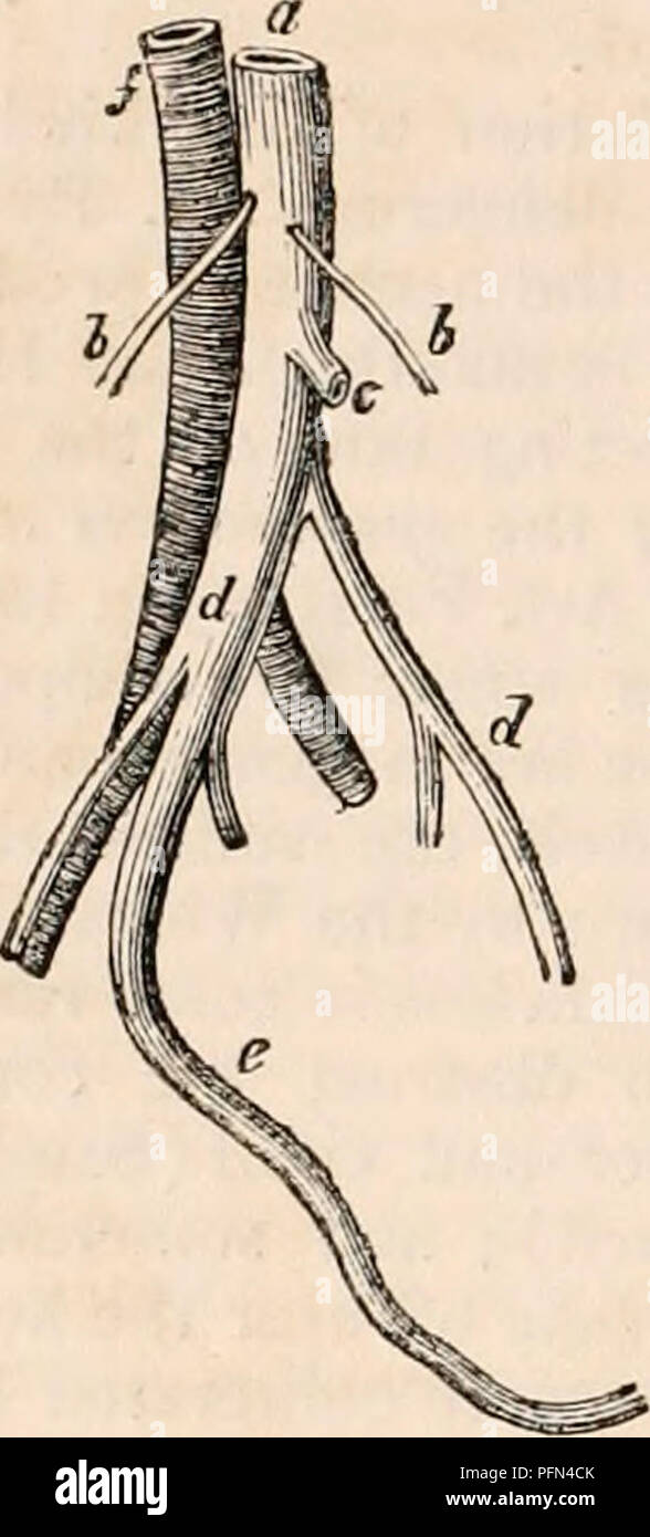The Cyclopdia Of Anatomy And Physiology Anatomy Physiology