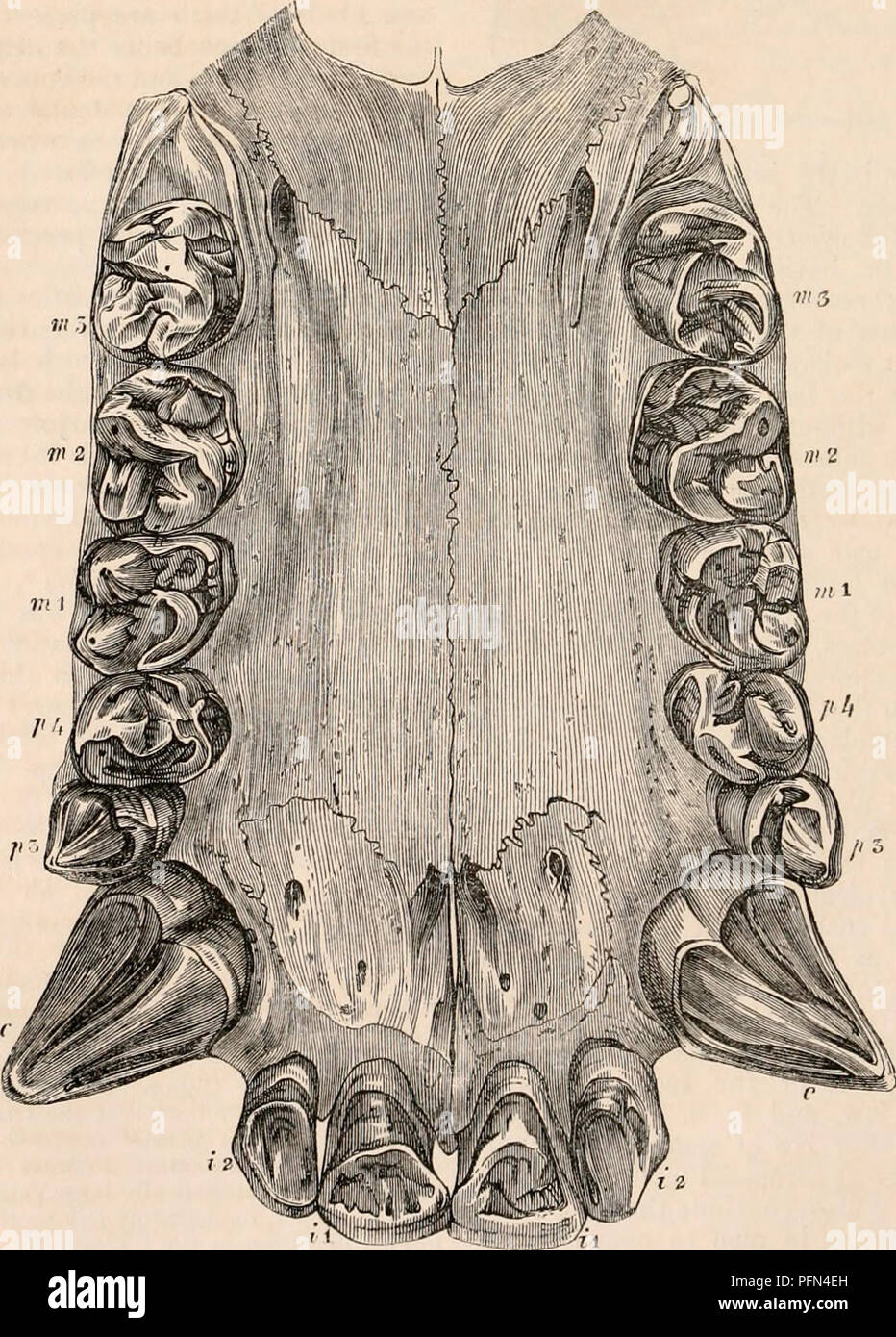 The cyclopædia of anatomy and physiology. Anatomy; Physiology ...