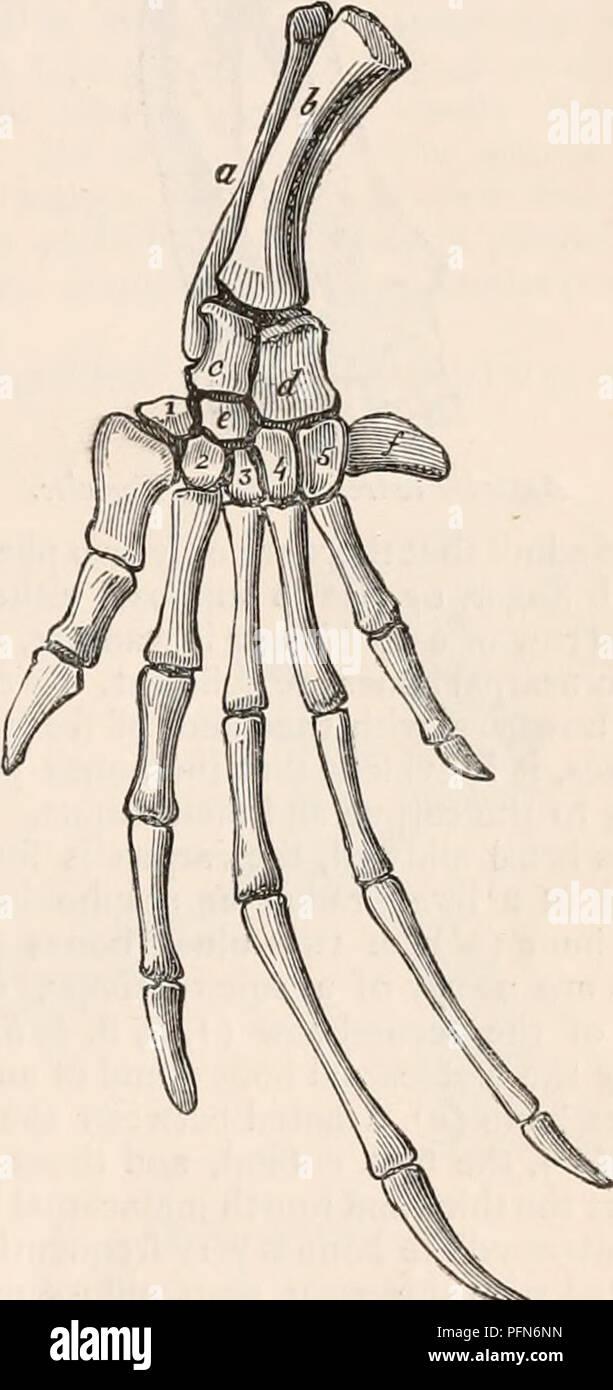 Elongated Bones Stock Photos & Elongated Bones Stock Images - Alamy