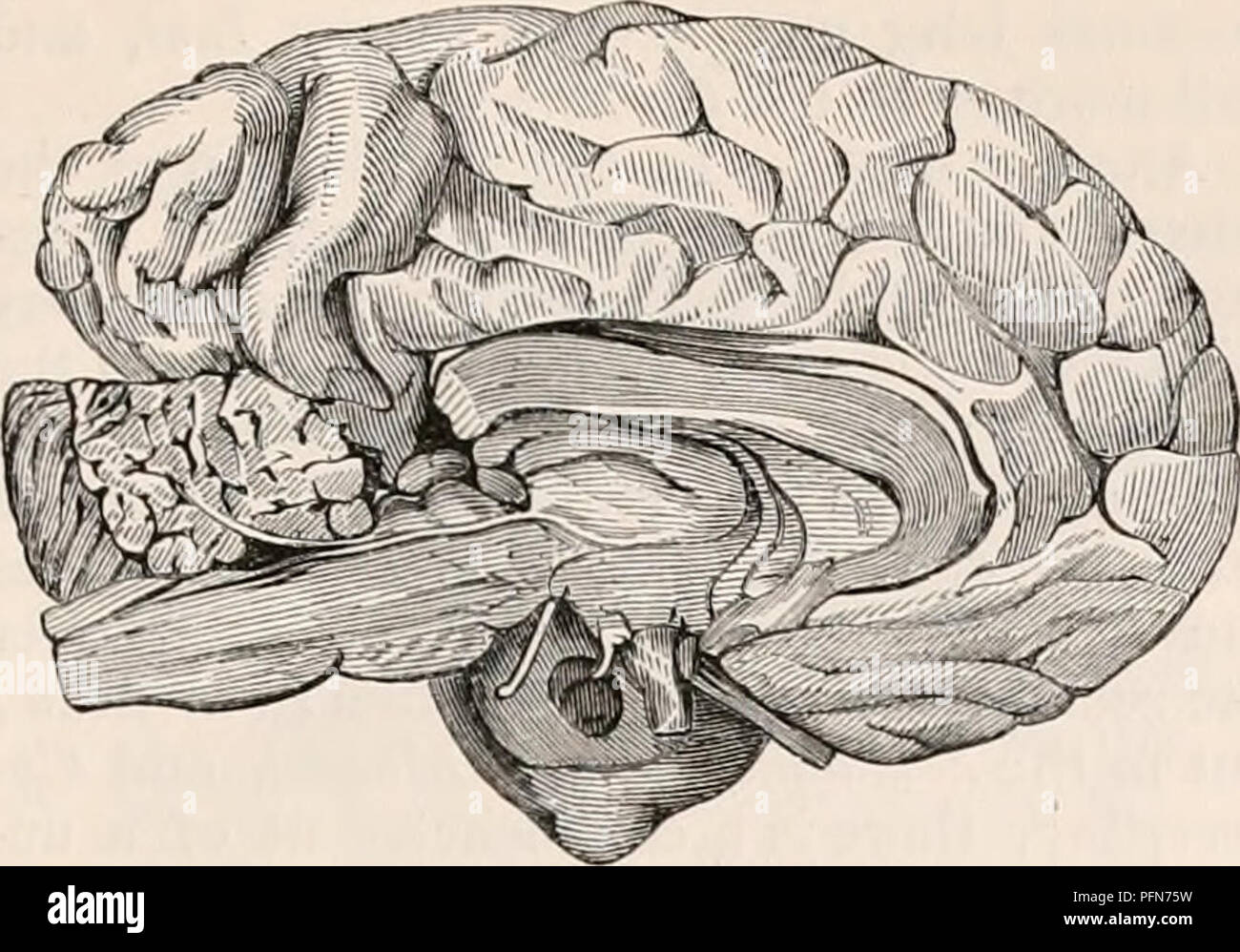 Monkey Brain Diagram Man - Wiring Diagram •