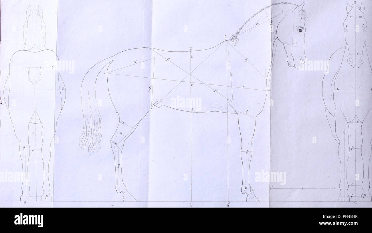 . Del cavallo nozioni elementari, del professore Lessona ad uso della R.M. Accademia. Horses; Horses. . Please note that these images are extracted from scanned page images that may have been digitally enhanced for readability - coloration and appearance of these illustrations may not perfectly resemble the original work.. Lessona, Carlo, 1784-1858; Cavagna Sangiuliani di Gualdana, Antonio, conte, 1843-1913, former owner. IU-R. S. l. : s. n. - Stock Image