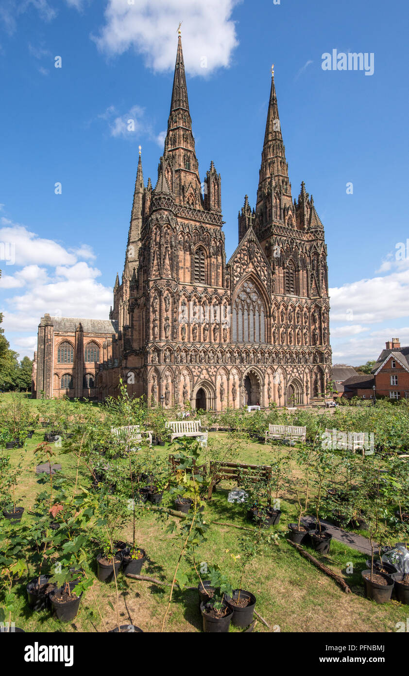 Lichfield Cathedral Staffordshire England with 1918 trees forming a Peace Woodland as part of a Great Exhibition, Imagine Peace, to celebrate the centenary of 1918 created by artist in residence Peter Walker from 17th August 2018 to 27th August 2018.  After the Exhibition the trees will be planted in Beacon Park Lichfield. Stock Photo