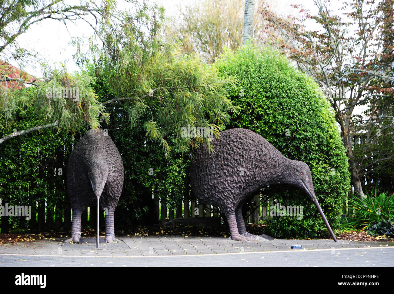 Neuseeland. 30th Apr, 2018. The kiwi is highly revered by the New Zealanders, recorded in April 2018 | usage worldwide Credit: dpa/Alamy Live News - Stock Image