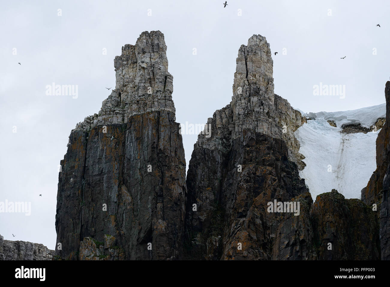 Steep cliffs with birds  at Alkefjellet, Svalbard, Norway Stock Photo