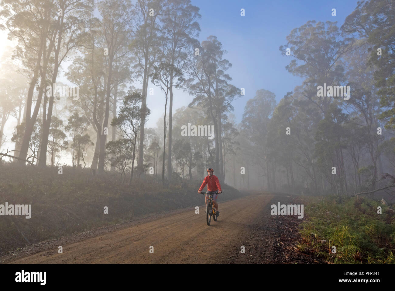 Cyclist in mist on the Ben Lomond Road - Stock Image