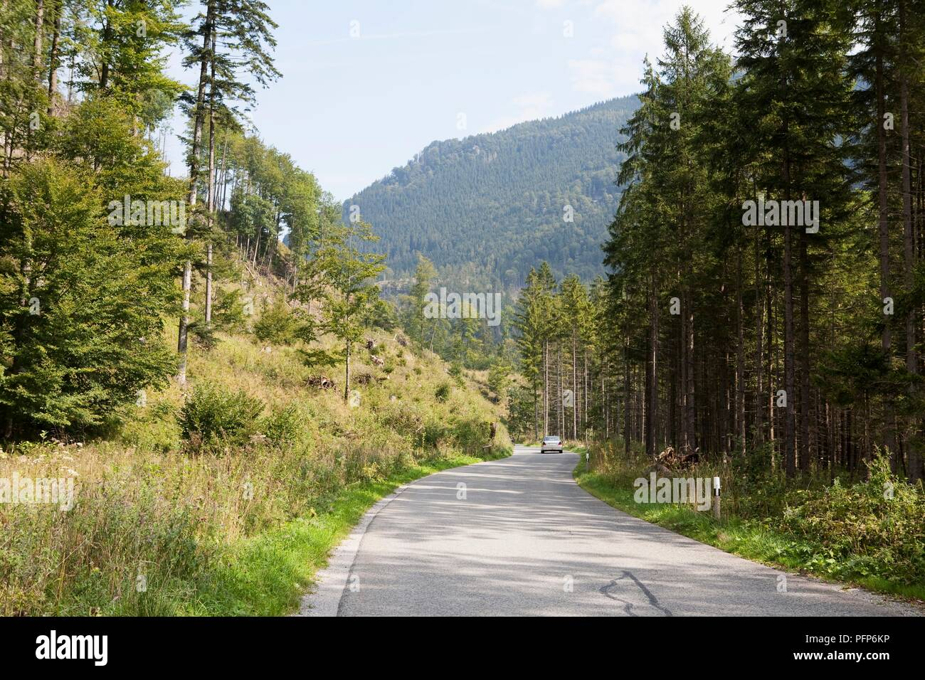 Germany, Bavaria (Bayern) state, Bayrischzell area, car in distance on road through forested area - Stock Image