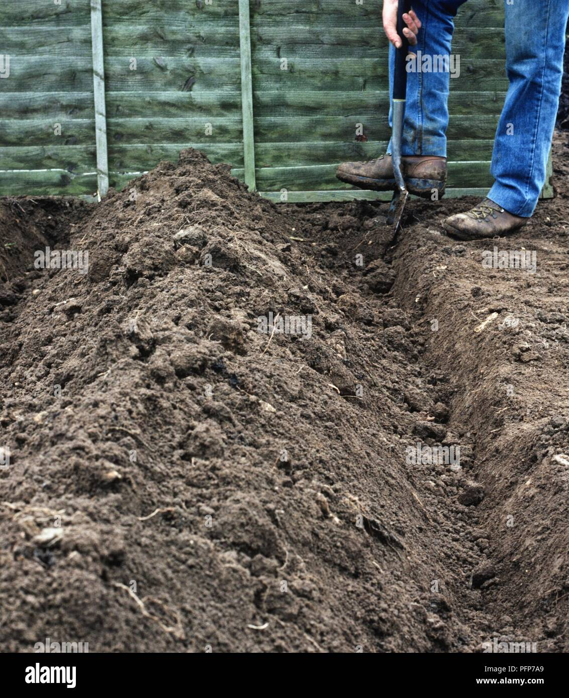 Man using spade to dig trench in vegetable garden Stock
