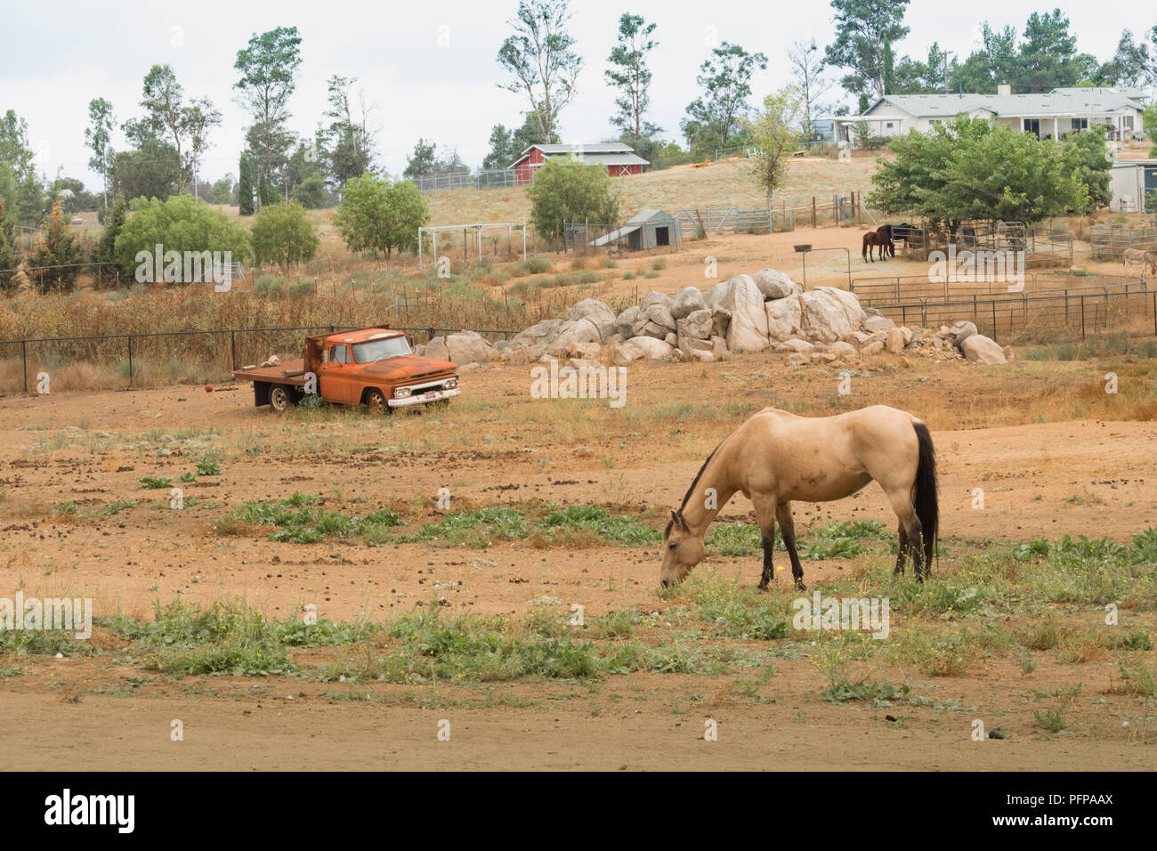 Rural old time vintage field landscape of an old orange flatbed truck with a bay horse in foreground, western farm lifestyle, peaceful scene - Stock Image
